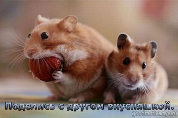 позитивные картинки с животными